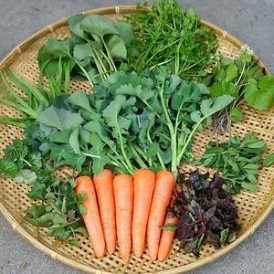 山菜入り!旬のおまかせ野菜セットSサイズ