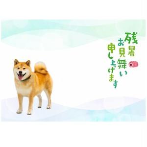 柴犬まる ポストカード ー残暑お見舞い 暑いねまるー