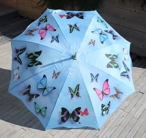 umbrella butterfly