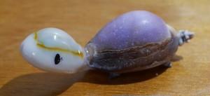 タカラガメ(ハナマルユキ光沢なし)