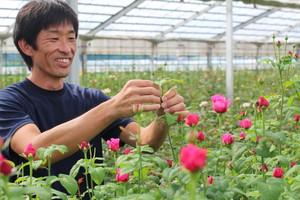 やぎバラ育種農園  ラロック・プレゼントブーケ(JA遠州夢咲)