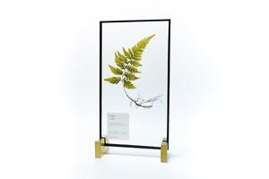 Ferns シダ植物