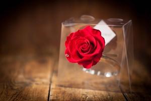 【花の誕生日プレゼント】プリザーブドフラワー/Jewel Ring-誕生日カラー-5月