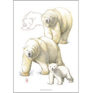 アート ポスター A4 サイズ KOUSTRUP & CO. - Polar bear ホッキョクグマ