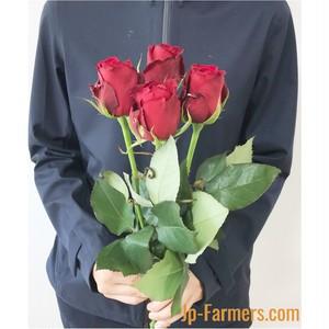 ※市場直送便! 京果園 10本 ★バラ品種名: サムライ08 赤バラの定番!