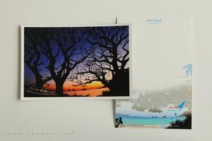奄美ポストカード「デイゴの影絵」