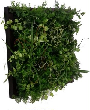 Wall Plants frame