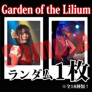 【チェキ・ランダム1枚】Garden of the Lilium