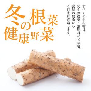 【送料無料*一部地域を除く】自然薯入り 無農薬・無肥料栽培 冬の根菜・健康野菜 やさい便