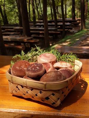 希少原木椎茸と丹波若鶏のBBQセット(カット野菜盛り合わせ付き)2名様分