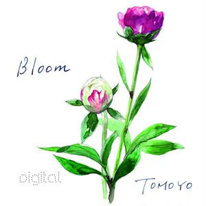 ソロアルバム「Bloom」