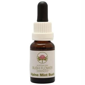 アルパインミントブッシュ[Alpine Mint Bush]