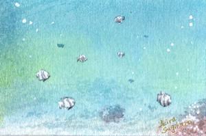 【ミニ原画】海の仲間たち㉖