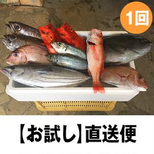 紀州・朝どれ直送便【お試しセット】