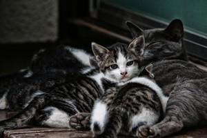STREET CATS 00101