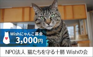 にゃんこ募金 3000