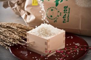 令和元年産 ハナエチゼン 玄米10kg