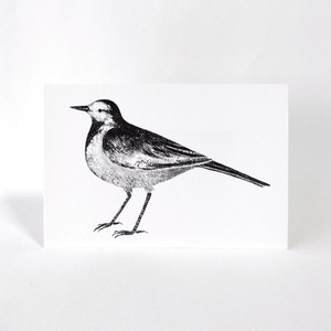 ハクセキレイのポストカード