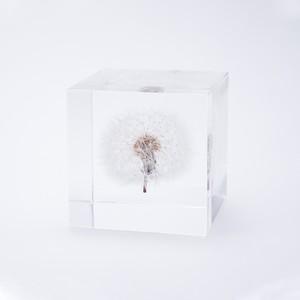 タンポポ(4cm角)[solacube]