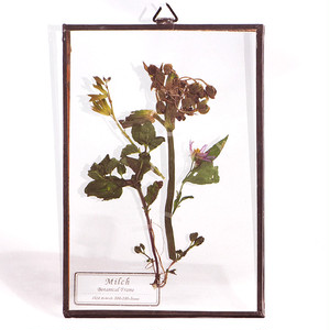 Botanical Frame S02 - Copper