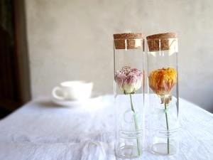 【受注生産】植物標本 Botanical Collection■ スリムボトル ■ ラナンキュラス