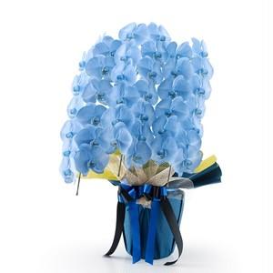 ※本州限定 ヤマト便 胡蝶蘭鉢大輪3本立ち33輪以上 <染ブルー> 紙札上付き 【お祝い花】
