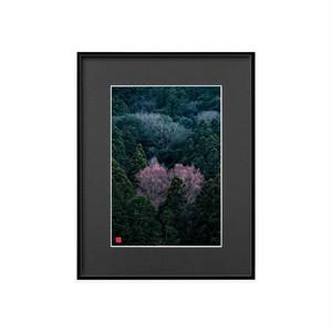 桂赤く染まる(ブラックボード)A4サイズ