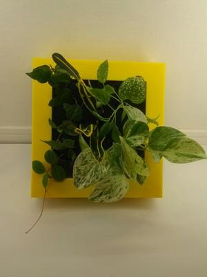 壁掛け観葉植物ミドリエ BASEのみの数量限定品(ワケあり)
