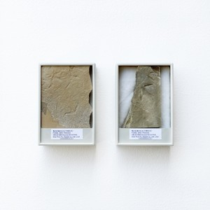 鳥の足跡の化石