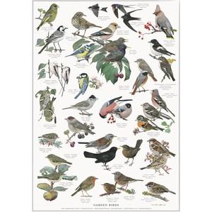 アート ポスター A4 サイズ KOUSTRUP & CO. - Garden birds 庭園の野鳥
