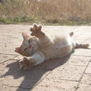 40%OFF CAT PIC 沖さん(クッキー5個入り)いちご味(賞味6/30以降)