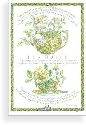 post card(tea roses)