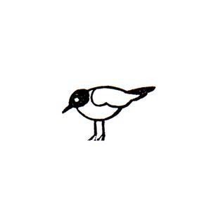 アホウドリ (ニ) Albatross