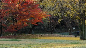 Autumn Leaves / Fall Colors - Nogawa Park (Tokyo)