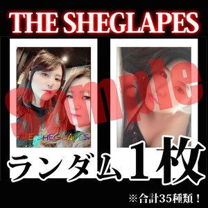 【チェキ・ランダム1枚】THE SHEGLAPES