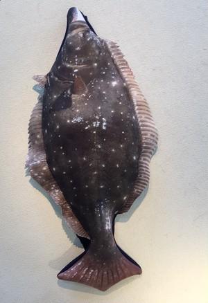 30cm~50cm 自分で釣った魚をオリジナル魚拓ッションに!