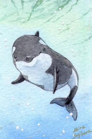 【ミニ原画】海の仲間たち⑥