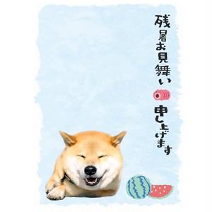 柴犬まる ポストカード ー残暑お見舞い ニコまるー
