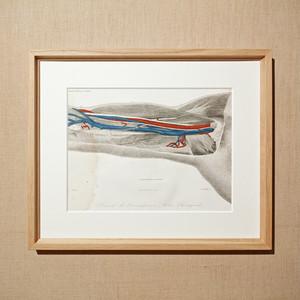 人体解剖図フレーム フランスアンティーク 18SEPT-AKZF002
