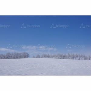 雪原と防風林