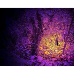 デジタルアート 神秘の森・12(あなたを見守るもう一人のあなた)