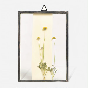 Botanical Frame S028(A_Black)
