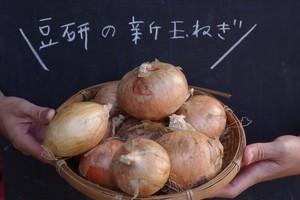 オーガニック 新玉ねぎ 5kg 愛知県田原市産 有機栽培