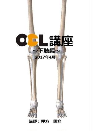 使える解剖学【下肢編】1枚組