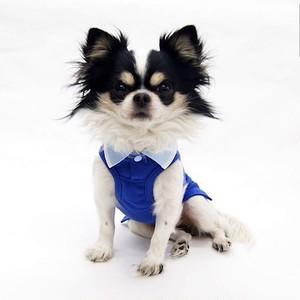 オシャレなポロシャツ ブルー 【サイズオーダー違い可能】 夏にぴったり!!犬服 小型犬 中型犬 大型犬