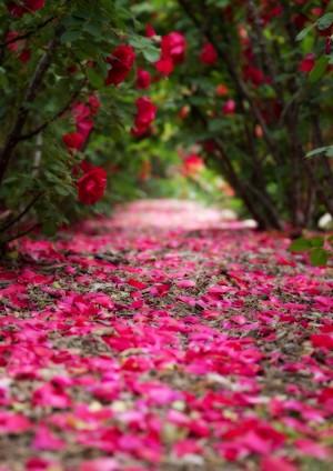 棘の先に咲く華