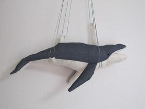 ザトウクジラ Humpback Whale
