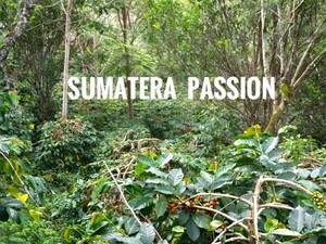 スマトラパッション (インドネシア)中深煎り 200g