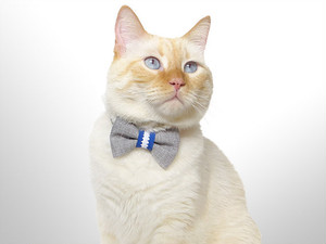 "Cat Collar with Bowtie by ""PETSbyCarvas"" (Grey Blue)"