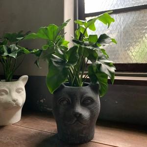 フィロデンドロン・セローム(猫の顔)